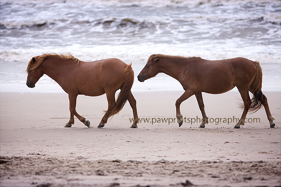 Horses walking on beach