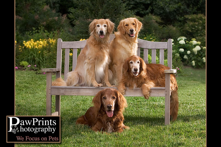 Four dogs on a bench