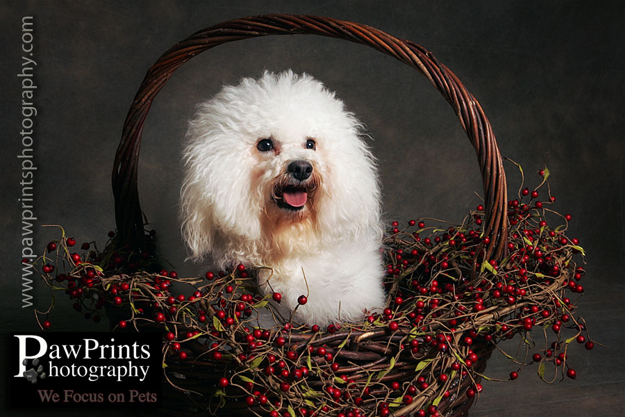 Bailey in a basket of berries