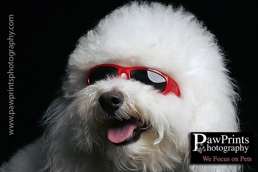 Bailey in red sunglasses
