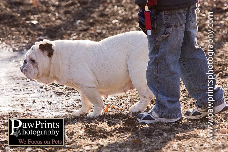 Boy with bulldog
