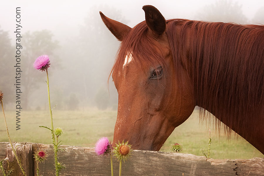 horse looking at flower