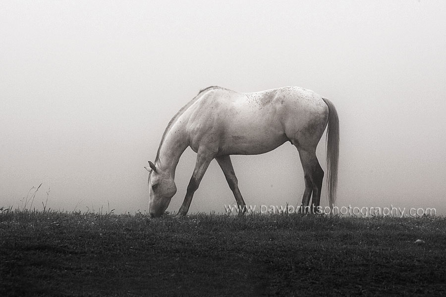 horse grazing in the am