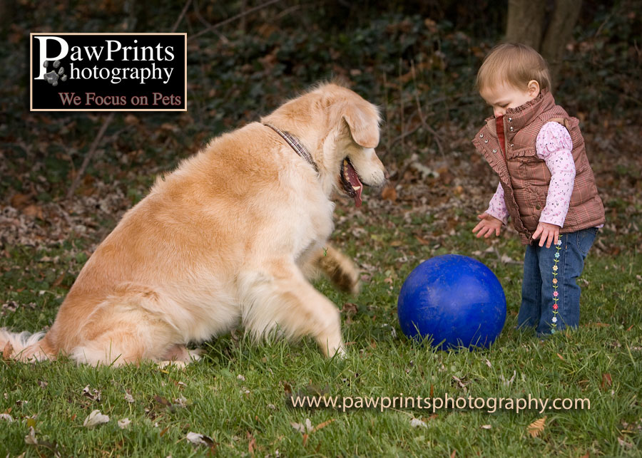 dog and child playing