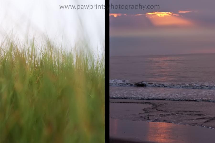 sea grass and sunrise