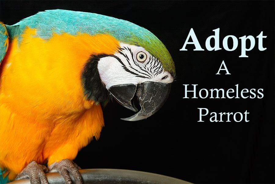 Adopt a Parrot