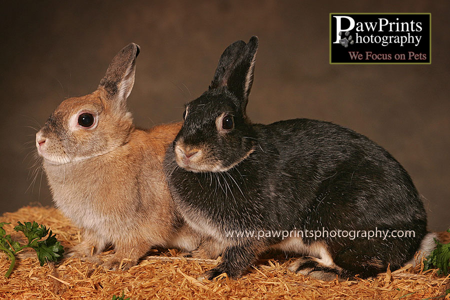 2 bonded rabbits