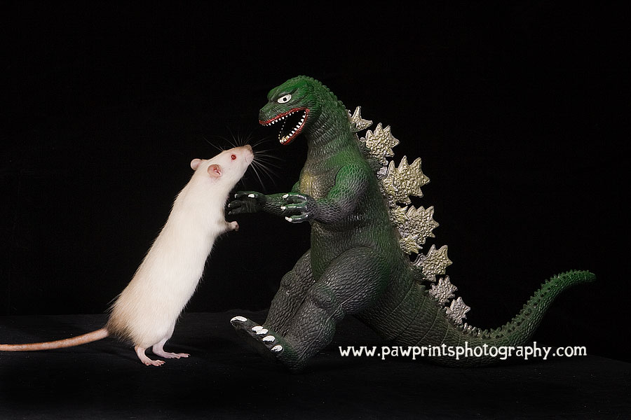 rat with godzilla