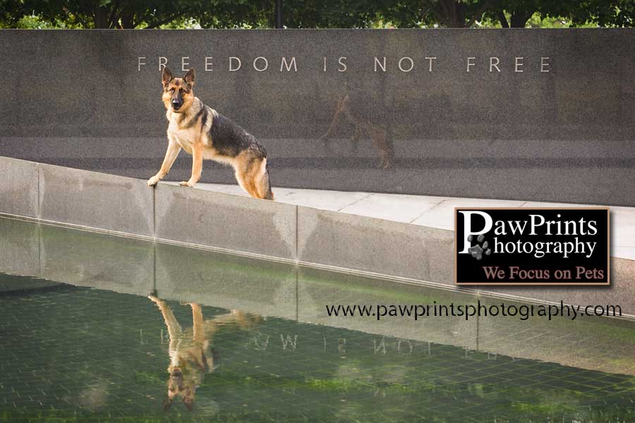 German Shepherd Korean War Memorial