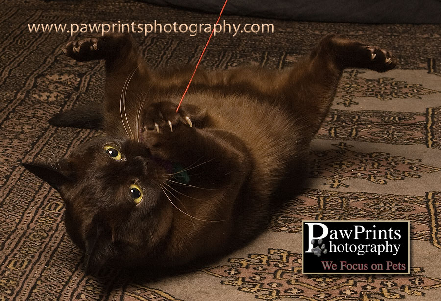 Sadie playing with a string
