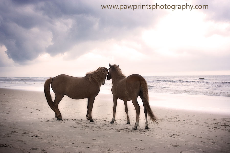 horses on beach with cloud rolling in