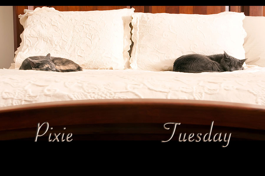 tuesday and pixie on bed