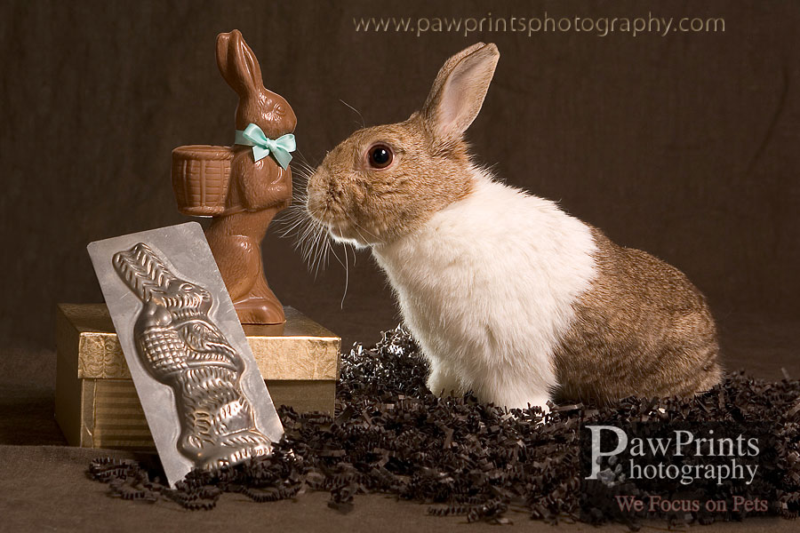 bunny_chocolate